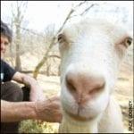 Herd Shares in Virginia: The Stumbling Beginnings