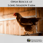 An Open Rescue at Long Shadow Farm