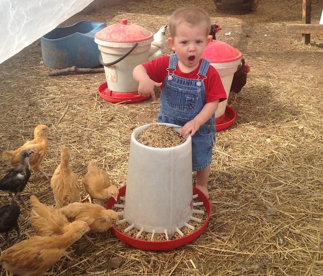 Provisions Family Farm
