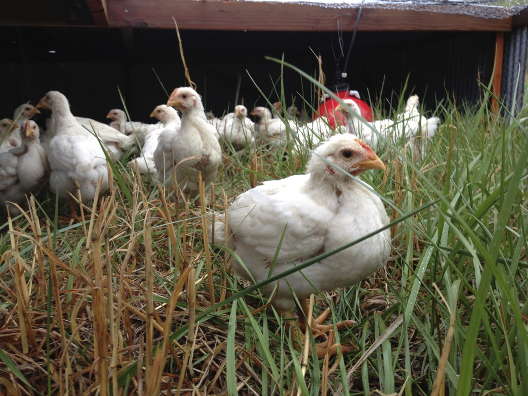 Farrar Family Farm