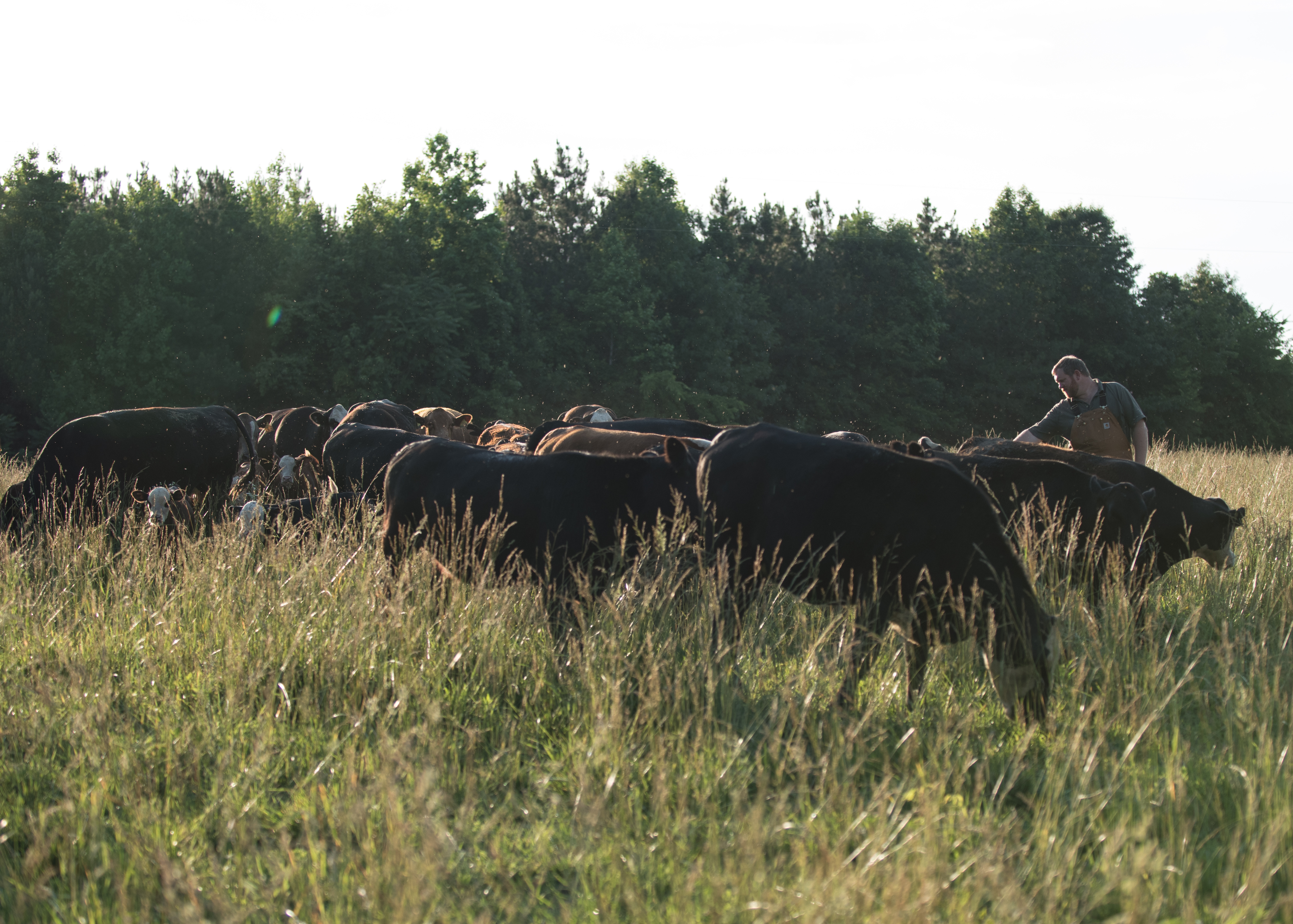 Gregory Family Farm Cattle and Clark