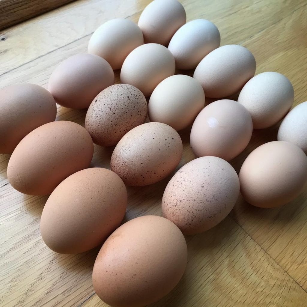 Yellow Hutch Farm egg rainbow