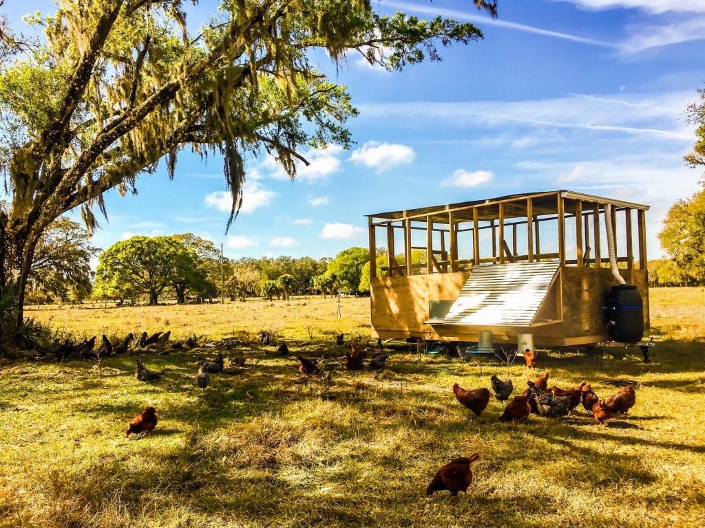 Hamblin Hills Farm