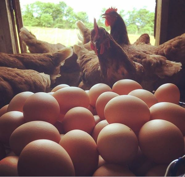 Whiffletree Farm Chickens & Eggs