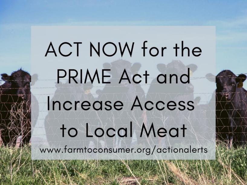 PRIME Act Cows Medium