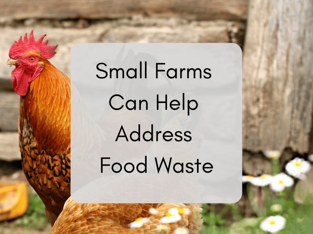 Small Farms Food Waste Rooster