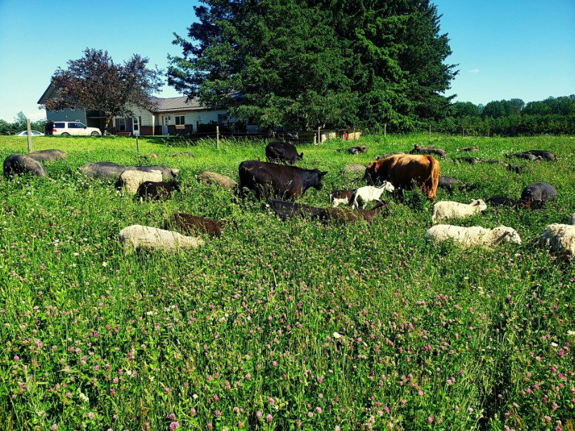 Provision Family Farms Multispecies Grazing