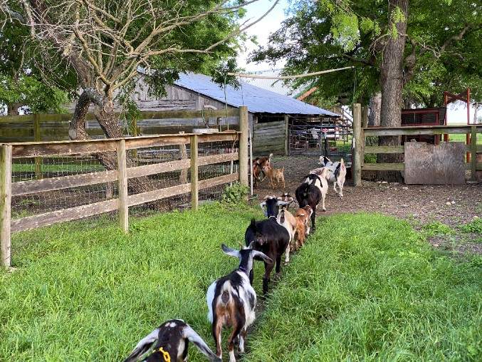 Babka Farms