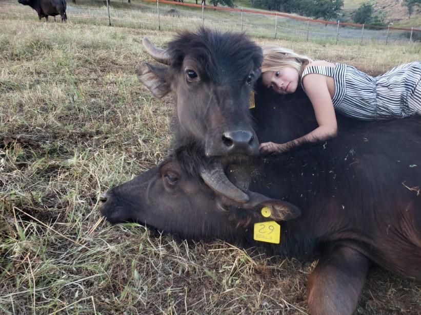 Water Buffalo and Girl