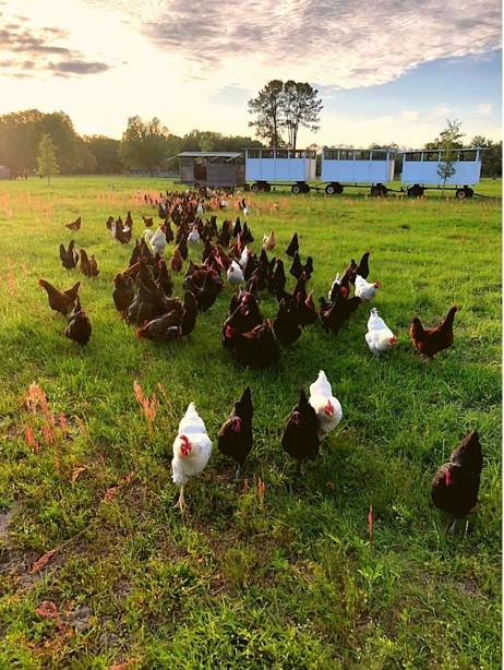 Price Creek Farm hens