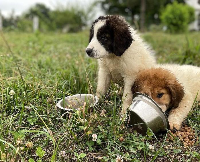 Farrar Family Farm puppies